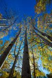 Tree trunks. Vibrant colors of autumn have paint this picturesque forest scenery stock images