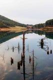 Tree trunks in water. In lake doksa Royalty Free Stock Photo
