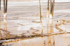 Tree Trunks Water Reflection In Geyser Basin Yellowstone National Park Royalty Free Stock Photography