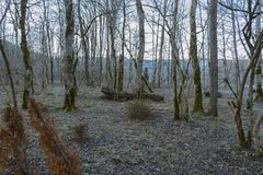 The winter forest Stock Photography