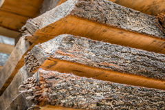 Tree trunks. And wood boards Stock Photography