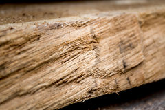 Tree trunks. And wood boards Stock Photos