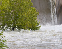 A tree is trying to keep standing in flood waters. That are pushing up against its trunk Royalty Free Stock Images