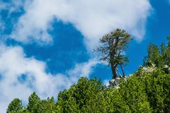 A tree above the others. A tree is tsanding above the others Royalty Free Stock Images