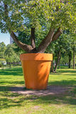 Tree in the tub. Royalty Free Stock Photos