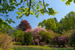 Tree and flowers garden or field in spring. royalty free stock photos