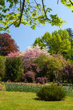 Tree and flowers garden or field in spring. stock images