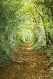 Tree tunnel. Trees leading down a country footpath in an English forest Royalty Free Stock Photography