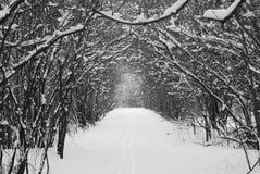 Tree tunnel 3 Stock Photo