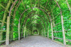 Tree tunnel Stock Photography