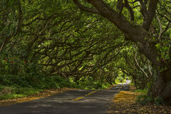 Free Tree Tunnel Royalty Free Stock Image - 50218526