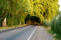 Tree tunnel Royalty Free Stock Photo
