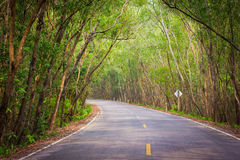 Tree Tunnel. Beautiful road and tunnel tree, Thailand Royalty Free Stock Image