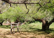 Tree tunnel and chair in a hot day Royalty Free Stock Image