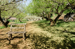 Tree tunnel and chair in vintage style Royalty Free Stock Photography