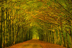 Tree tunnel in a forest in autumn Stock Photos