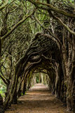 Tree Tunnel. The tree tunnel of Gormanston College in Ireland stock photography