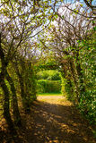 Tree tunnel by hornbeam trees Stock Images