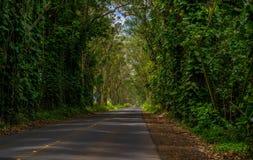 Tree tunnel, maluhia road, kauai, hawaii. Driving through the eucalyptus tree tunnel, on the maluhia road, toward poipu beach, kauai, hawaii Stock Image