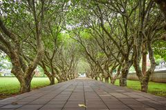 Tree tunnel at Nan, Thailand on June royalty free stock photo