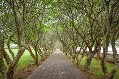 Tree tunnel at Nan, Thailand on June royalty free stock image