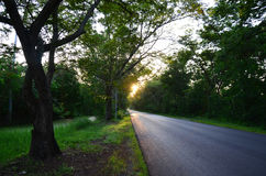 Tree Tunnel Natural Road at Sunset time Stock Image