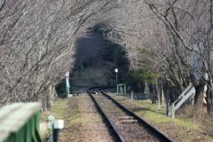 Tree tunnel. On the railway Royalty Free Stock Photography