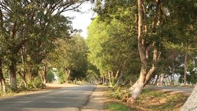 Tree tunnel road in Bagan, Myanmar. View of the tree tunnel road in Bagan, Myanmar. From the 9th to 13th centuries, the city was the capital of the Kingdom of stock footage