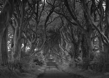 Tree tunnel road in black and white Royalty Free Stock Photography
