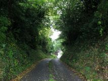 Tree tunnel road, Ireland Stock Images