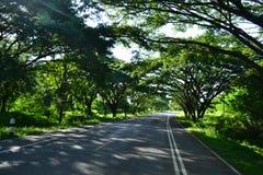Tree tunnel and road. Tree tunnel  and road landscape Royalty Free Stock Image