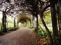 A tree tunnel. A romantic tree tunnel in Hyde Park Stock Photography