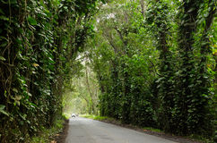 Tree tunnel Stock Image