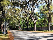 Tree tunnel, St Augustine, Florida Royalty Free Stock Photography