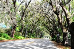 Tree tunnel in St Augustine, Florida Stock Images