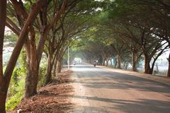Tree tunnel in Thailand royalty free stock photography