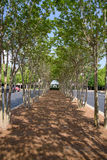 Tree Tunnel Trail to corporate building Royalty Free Stock Photography