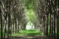 Tree tunnel Royalty Free Stock Images