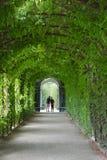 Tree tunnel walkway Royalty Free Stock Photo