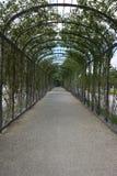 Tree tunnel walkway. Schonbrunn, Austria, Vienna Stock Images