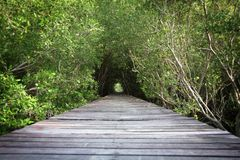 Tree tunnel and wooden bridge Royalty Free Stock Photos