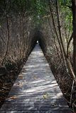 Tree tunnel and wooden bridge Royalty Free Stock Images