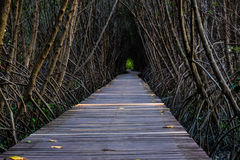 Tree tunnel. The wooden bridge in the middle The trees along the tunnel Royalty Free Stock Photo