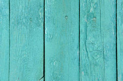 Tree turquoise Royalty Free Stock Image