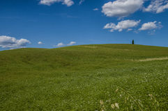 A tree, Tuscany. A lonely cypress on Val D'Orcia, Tuscany Royalty Free Stock Photography