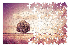 tree in a Tuscany wheatfield in shape of puzzle - Tusc stock photography