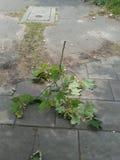 Tree twig Stock Image