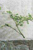 Tree twig Stock Photography