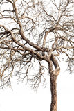 Tree twigs with bare trunks and branches Stock Photography