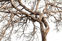 Tree twigs with bare trunks and branches Stock Photo
